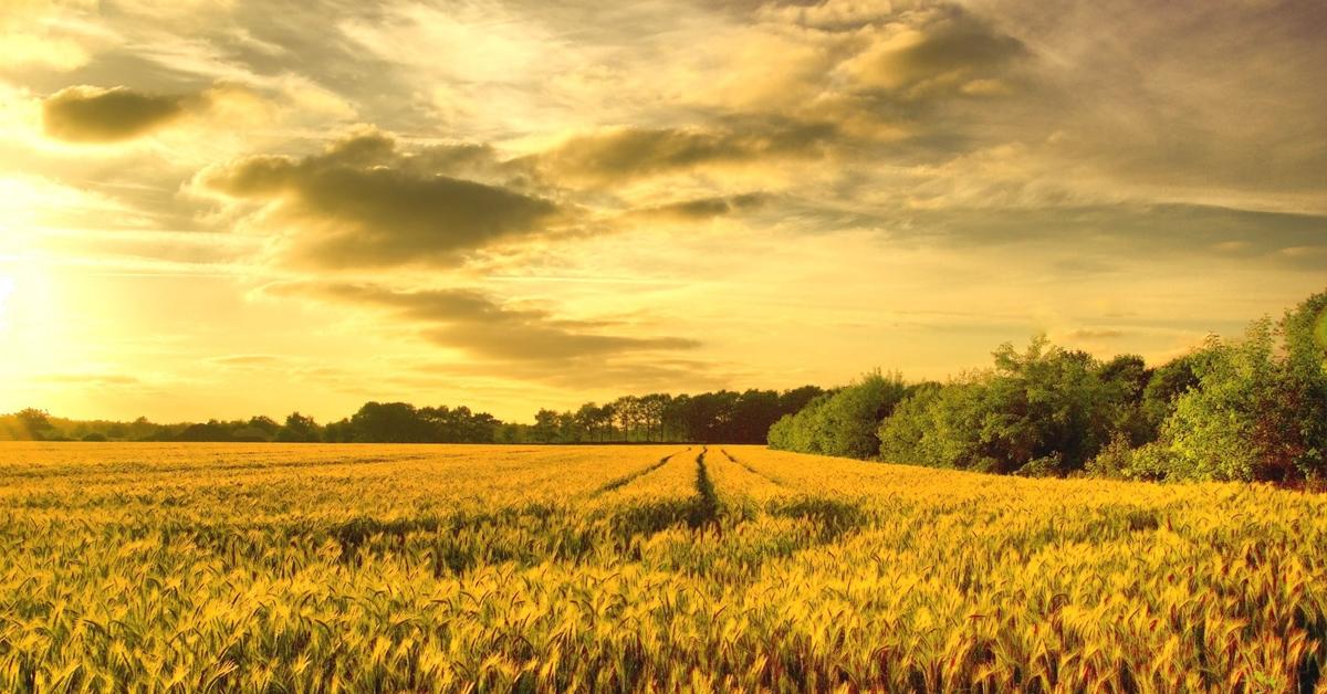 Ζητούνται αγροτεμάχια εκτός σχεδίου