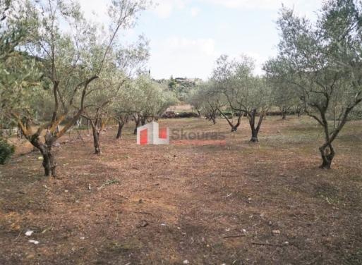 Κέντρο, Ασίνη Αγροτεμάχιο 1600 τ.μ.
