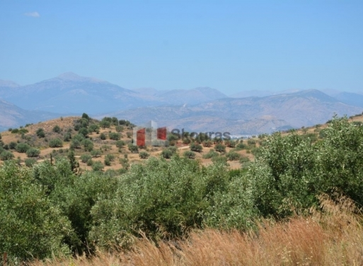 Neo Roeino Grundstück 871 qm