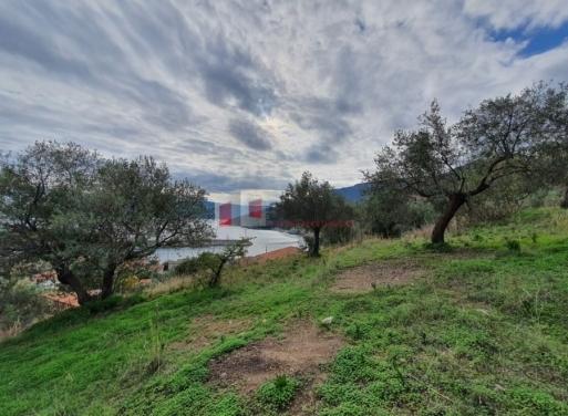Sampatiki Grundstück 3.035 qm