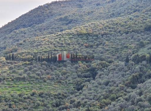 Τυρός, Απόλλωνας Οικόπεδο 3494 τ.μ.