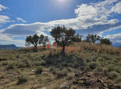 Νέο Ροεινό, Νέα Τίρυνθα Αγροτεμάχιο 21000 τ.μ.