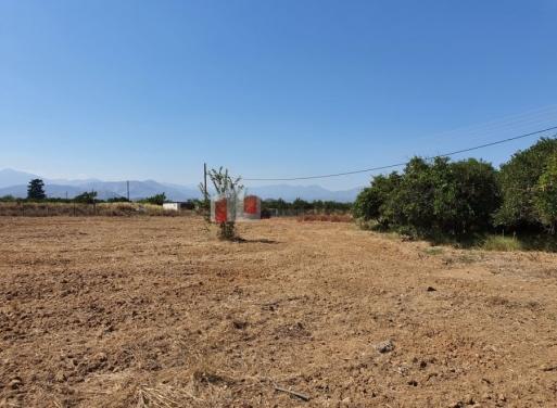 Midea Landparzelle 11.850 qm