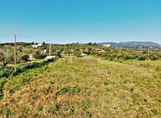 Καλαμάκι, Πεταλίδι Οικόπεδο 3268.7 τ.μ.