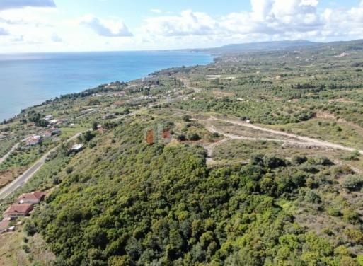 Αχλαδοχώρι, Πεταλίδι Οικόπεδο 56000 τ.μ.