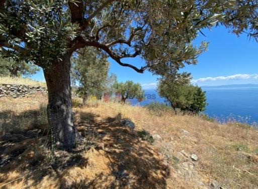 Τυρός, Απόλλωνας Αγροτεμάχιο 6800 τ.μ.