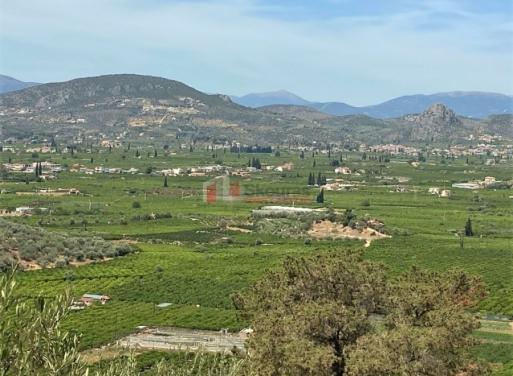 Δρέπανο, Ασίνη Αγροτεμάχιο 10300 τ.μ.