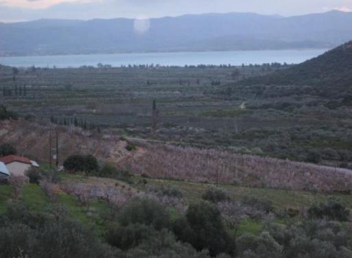 Κιβέρι, Λέρνα Αγροτεμάχιο 185000 τ.μ.