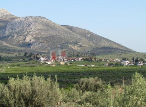 Fichti,  Mycènes Terrain Agricole 2.000 m2