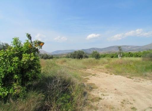 Agricultural Lands for Sale Greece - Skouras Real Estate