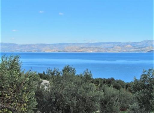 Ξηροπήγαδο, Βόρεια Κυνουρία Αγροτεμάχιο 5700 τ.μ.