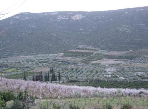 Κιβέρι, Λέρνα Αγροτεμάχιο 125000 τ.μ.