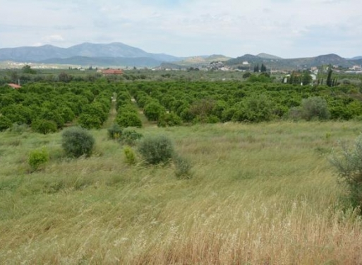 Tirintha Landparzelle 4.100 qm