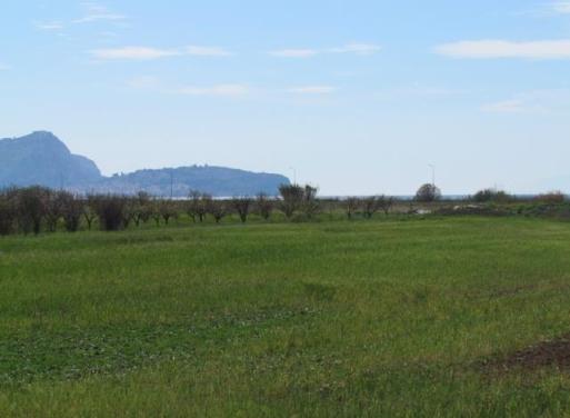 Νέα Κίος Αγροτεμάχιο 10750 τ.μ.