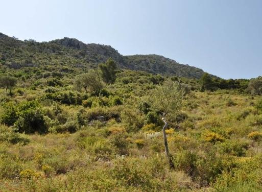 Archaia Epidavros Landparzelle 17.669 qm