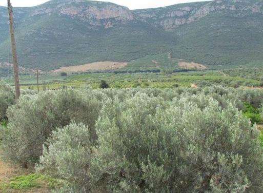Kiveri Landparzelle 15.000 qm