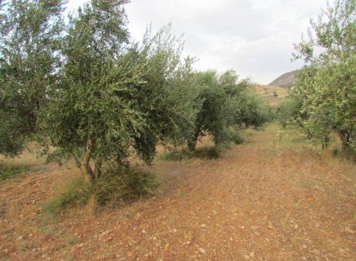 Prosimna,  Mycènes Terrain Agricole 40.000 m2