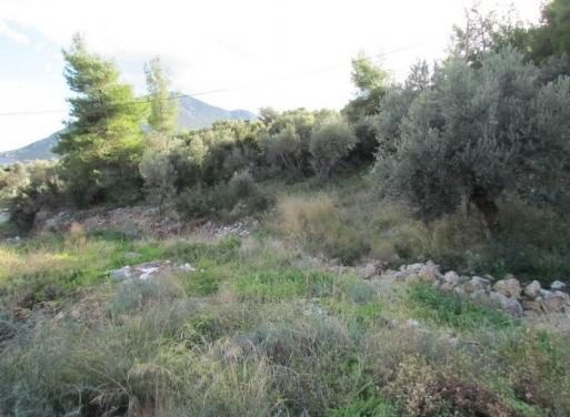 Archaia Epidavros Landparzelle 13.900 qm