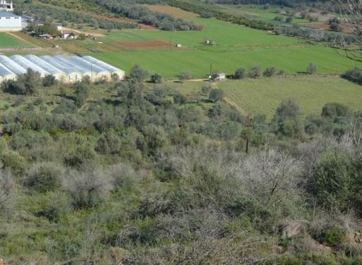 Lefkakia, Nafplio Agricultural Land  15000 m2