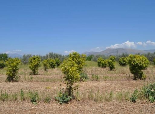 Λάλουκας, Άργος Αγροτεμάχιο 10347.19 τ.μ.