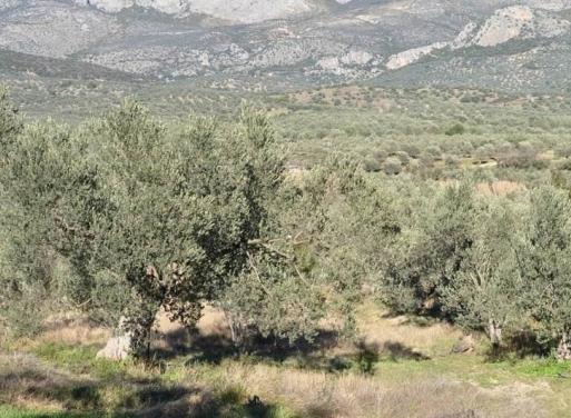 Metochi Landparzelle 21.500 qm