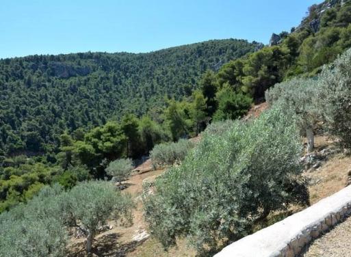 Nea Epidavros Landparzelle 4.500 qm