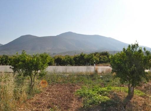 Νέο Ηραίο, Μυκήνες Αγροτεμάχιο 11900 τ.μ.