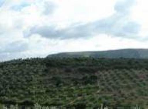 Pirgiotika Landparzelle 10.000 qm