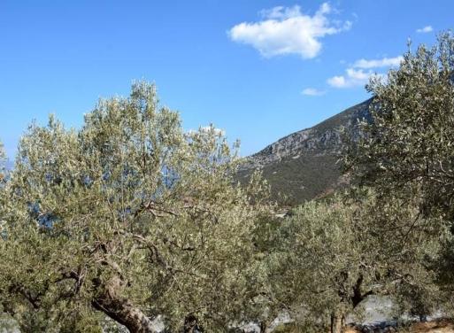 Archaia Epidavros Landparzelle 1.800 qm