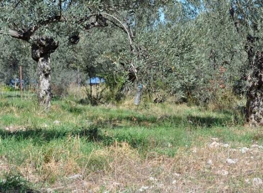 Archaia Epidavros Landparzelle 1.000 qm
