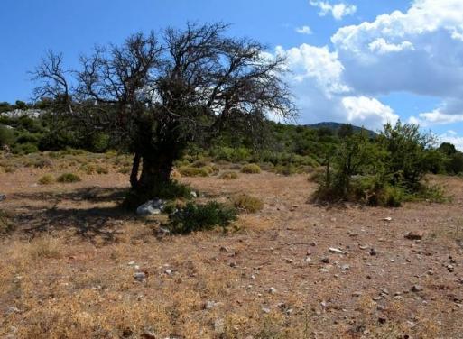 Archaia Epidavros Landparzelle 7.571 qm