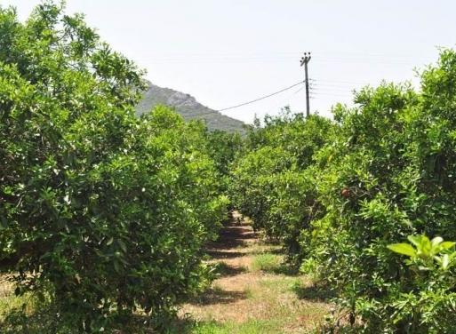 Agios Adrianos Земельный участок 12.000 кв.м