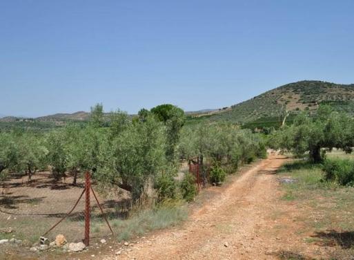 Agios Adrianos Земельный участок 4.400 кв.м