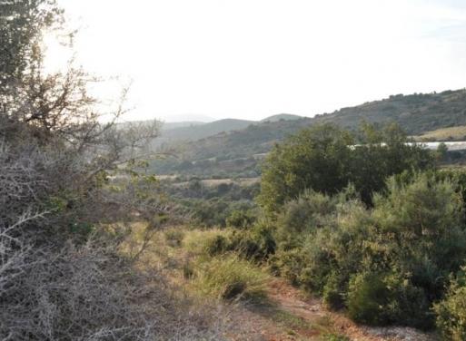 Λευκάκια, Ναύπλιο Αγροτεμάχιο 6000 τ.μ.