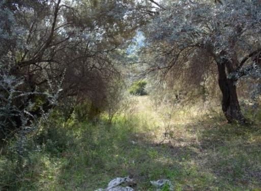 Nea Epidavros Landparzelle 5.000 qm