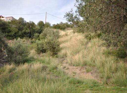 Sampatiki Grundstück 500 qm