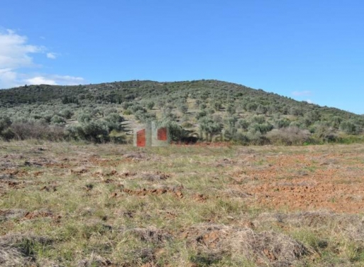 Fichti,  Mycènes Terrain Agricole 3.500 m2