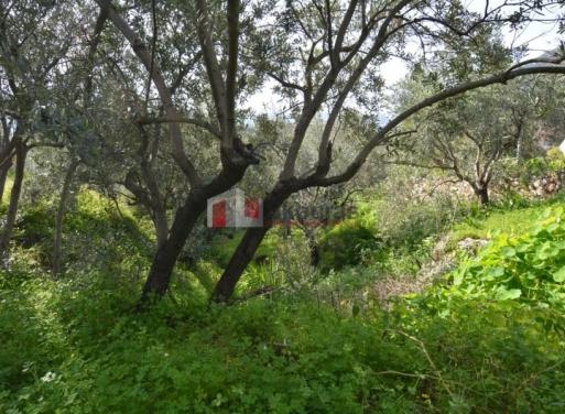 Tyros Grundstück 1.000 qm