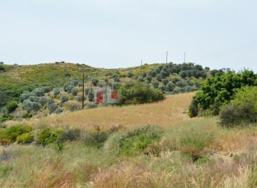 Neo Roeino Landparzelle 6.000 qm