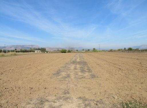 Nea Kios Agricultural Land  45000 m2
