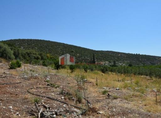 Nea Epidavros Landparzelle 5.800 qm