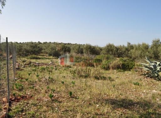 Βιβάρι, Ασίνη Οικόπεδο 200 τ.μ.