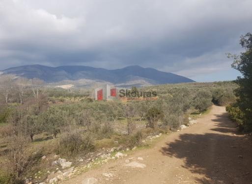 Λυγουριό, Ασκληπιείο Αγροτεμάχιο 5500 τ.μ.