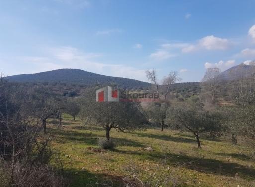 Ligourio Landparzelle 5.500 qm