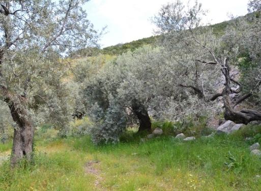 Αρχαία Επίδαυρος, Επίδαυρος Αγροτεμάχιο 66700 τ.μ.