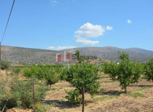Ίρια, Ασίνη Αγροτεμάχιο 16000 τ.μ.