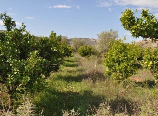 Karathona Landparzelle 3.000 qm