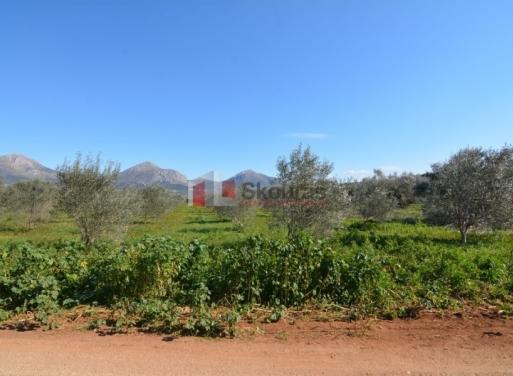 Fichti,  Mycènes Terrain Agricole 4.464 m2