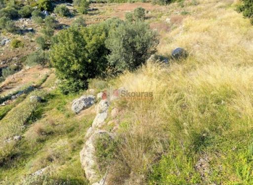 Βιβάρι, Ασίνη Αγροτεμάχιο 11200 τ.μ.
