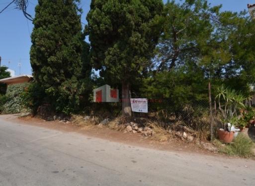 Drepano Grundstück 500 qm